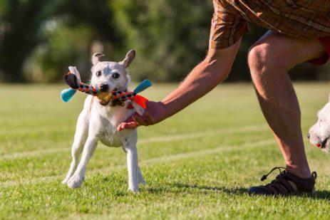 Dog workout: anche in palestra Fido è il partner migliore.